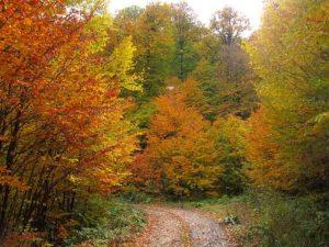 جنگل راش پاییزی 3